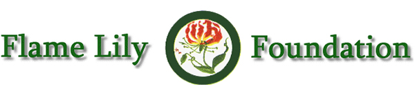 Flame Lily Foundation logo of the Rhodesian Asociation of South Africa